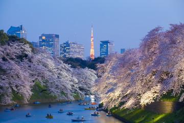 Photo sur Aluminium Tokyo Beautiful sakura cherry blossom light up and Tokyo Tower landmark at Chidorigafuchi Tokyo