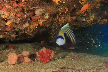 Tropical fish sea ocean coral reef underwater