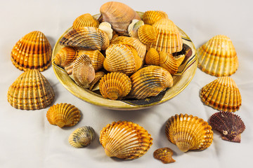 seashells collection isolated, Seashell background