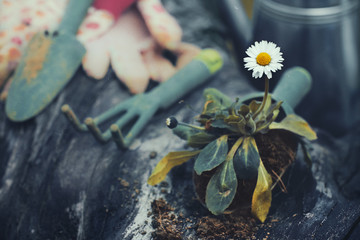 Gardening equipment and a daisy