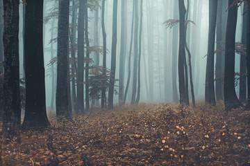 Misty forest landscape, Sljeme, Zagreb, Croatia