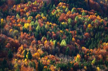 Aerial view of autumn trees in forest, Salzburg, Austria