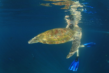 Sea Turtle and young woman snorkeling and photographing it