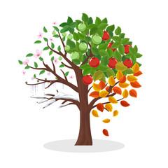 Wall Mural - Seasons tree vector