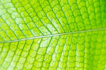 tropical plant(熱帯植物)