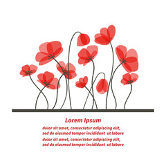 Floral background. Beautiful poppies isolated on white. Romantic card or invitation template.