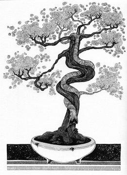 simple black on white drawing - BONSAI - detailed decorative art