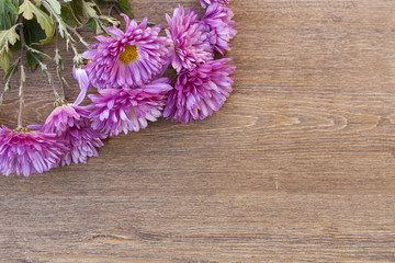 Pink chrysanthemum on wooden background