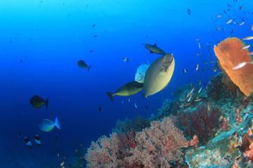 Fish school in Ocean underwater