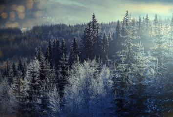 Poster Morning with fog Winter resort