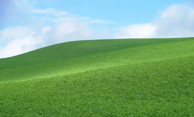 Wall Murals Green hill with green grass