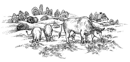 Field with cows. Vector illustration.