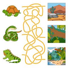 Maze game (turtle, snake, iguana and habitat)