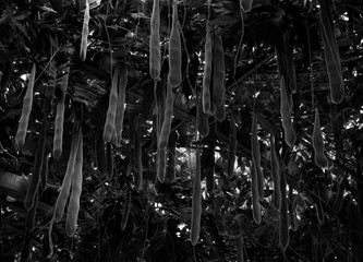 artistic work around vegetation in black and white