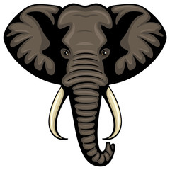 Vector illustration of the head of an African elephant.