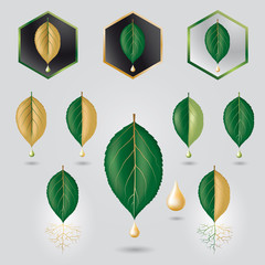 Leaf with precious sap