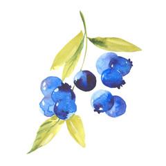 watercolor ripe blueberries
