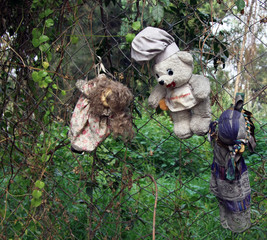 Old Spooky Dolls hanging in a tree in Mexico City [Isla de las Munecas /Island of the Dolls]