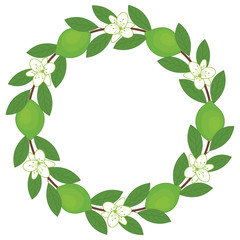 Lime wreath