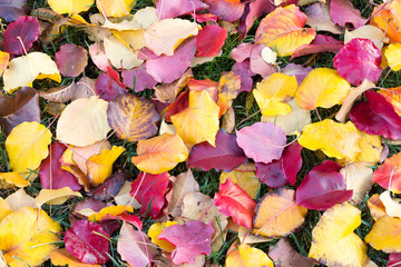 Many colors of Fall