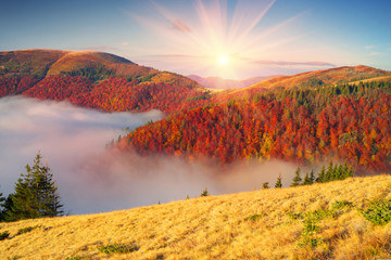 Wall Murals Mountains Fog in the autumn