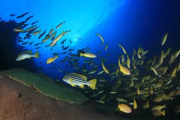 Tropical fish on coral reef sea ocean underwater