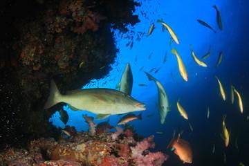 Coral reef, tropical fish, sea ocean underwater