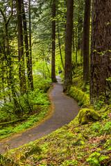Scenic Trail in Columbia River Gorge, Oregon