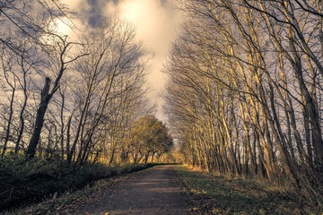 Tall trees without leaves by a nature road