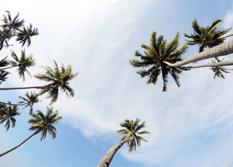 Coconut tress beside the beach during daytime.