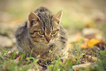 Closeup photo of cat in the park