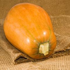 image of pumpkin on matting close-up