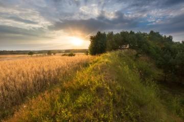 Fotobehang Platteland Corn field landscape
