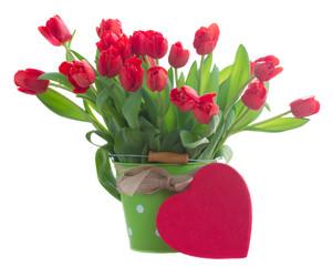 fresh red tulip flowers