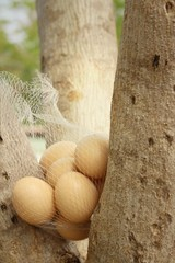 Eggs on a tree at the park.