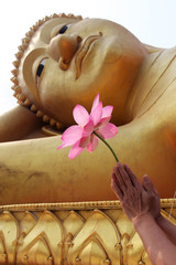 hand give resect by lotus flower to buddha image
