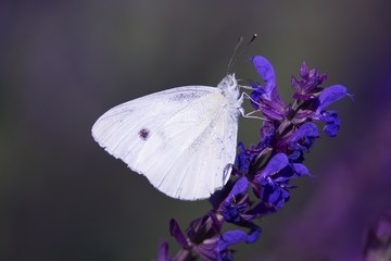 Butterfly on blue flower