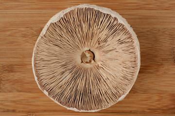 Parasol mushroom from below