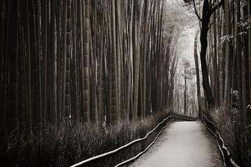 Keuken foto achterwand Grijze traf. Bamboo Grove