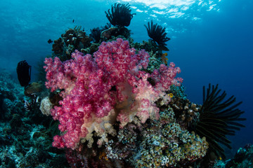 Colorful Soft Corals