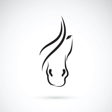 Vector of a horse face design on white background. Animal.