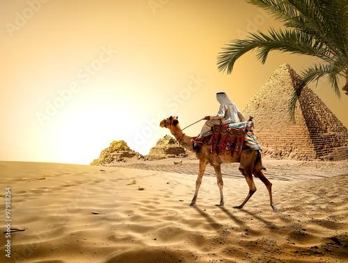 стая верблюдов на берегу бесплатно