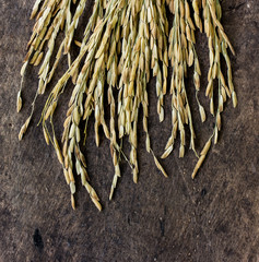 paddy rice seed on a wood background