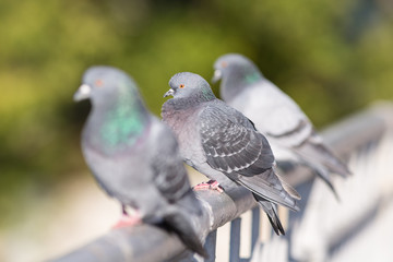 doves resting on the railing