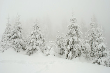 Beautiful winter landscape with trees in fog