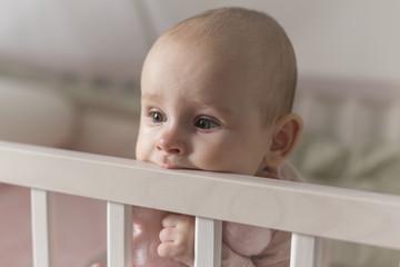 first teeth grow a baby