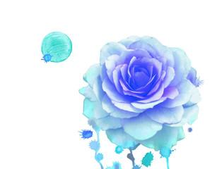 Watercolor  blue rose.