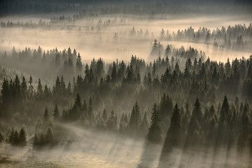 Poster Morning with fog forest filled with fog