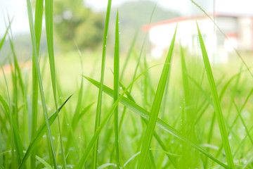 Green Nature .soft focus