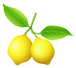 Fresh lemon on the branch